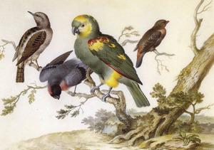 Vier tropische vogels