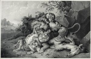 Tijgers en leeuwen in gevecht over een dood paard