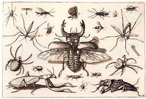 Vliegend hert en andere insecten