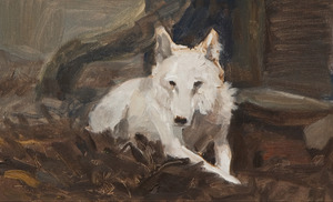 Witte wolf, liggend