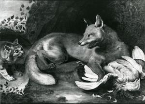 Een vos verdedigt buit tegen een wilde kat