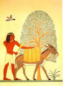 Inheemse bewoner van de Pount streek