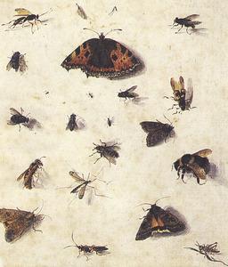 Studies van insecten waaronder vliegen, motten, een sprinkhaan, een vlinder en stekende insecten