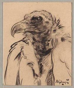 Condor (kop)