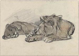 Schetsen van leeuw en leeuwin
