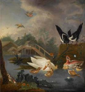 Vogels in een vijver