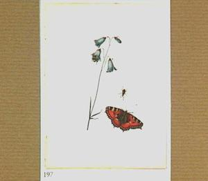 Bloem, vlinder en tor