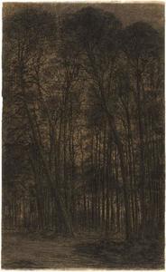 Pine woods near Oele