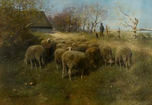 Herder met schapen