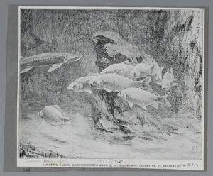 Aquariumbassin