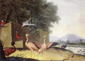 Exotische vogels waaronder flamingo's, een papegaai en een lady Amherstfazant