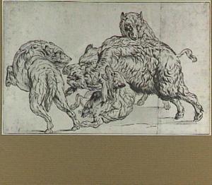 Honden vechtend met een zwijn