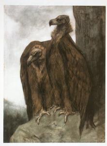 Twee gieren