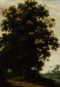 Een boom aan de rand van een bos
