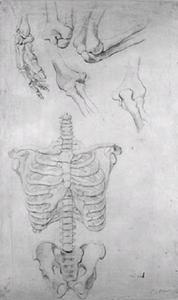 Hand in profiel, vier voorstellingen van een ellebooggewricht, de wervelkolom met de borst en het bekken, frontale positie