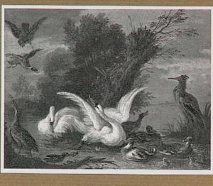 Zwanen en eenden in het water, aangevallen door een roofvogel