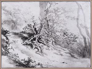 Oude boomstronk in een heuvelachtig boslandschap