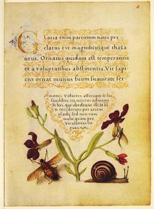 Violier, slak en twee insecten