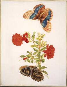 Granaatappelbloesem en twee Morpho vlinders