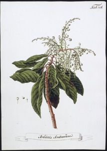 Bloeiende aardbezieplant