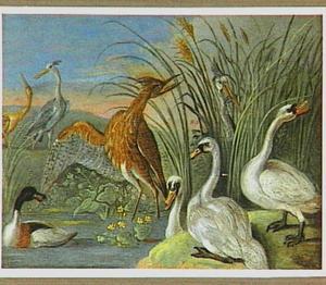 Watervogels bij een vijver