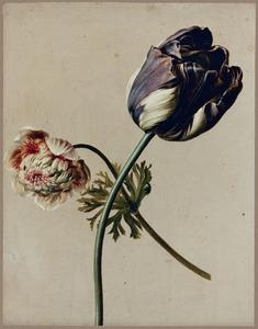 Tulp en anemoon