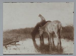 Paarden bij een drenkplaats