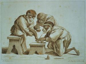 Apen bezig met een voetoperatie