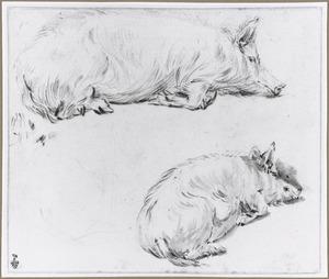 Twee liggende varkens