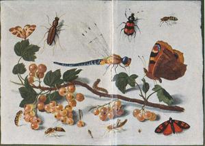Studie van insecten rondom een takje met witte aalbessen, op een witte ondergrond