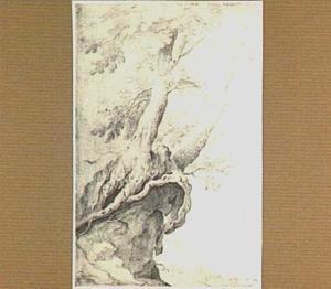 Twee bomen op een rots