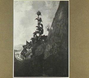 Berglandschap met op de voorgrond een distel en een geranium