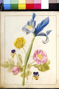 Roos, driekleurig viooltje, boterbloem en Spaanse lis
