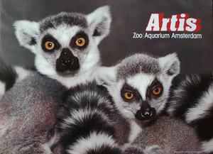 Artis-Affiche: 'Artis Zoo Aquarium Amsterdam' ringstaartmaki's