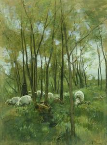 Schapen in het bos