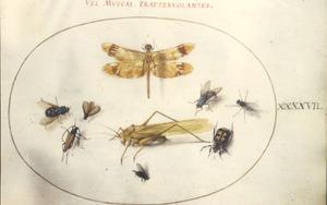 Sprinkhaan, libel, vlieg en andere insecten