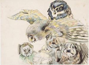 Schetsblad met uilen