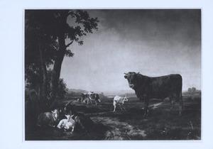 Stier in een weidelandschap