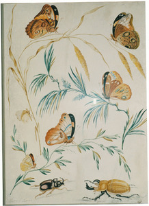 Grote vossenstaart, grove den en andere tak met vijf vlinders, neushoornkever en vliegend hert