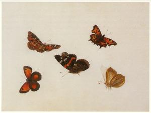 Atalanta en vier andere vlinders