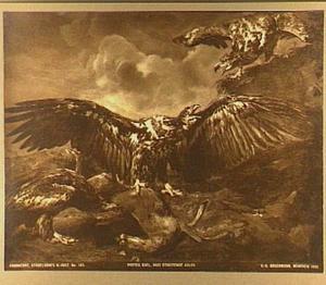 Drie adelaars vechten om een ree