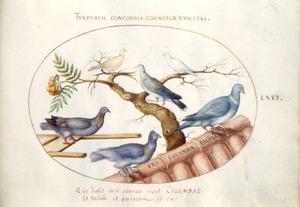Zes duivensoorten, waaronder een houtduif, op boomtakken en dakpannen