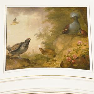 Wielewaal, een paartje Korhoenders een Kroonduif, een boskwartel-soort en andere vogels in een rotsachtig landschap