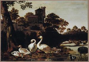 Zwanen en andere watervogels in een rivierlandschap