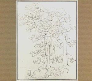 Loofbomen in de omgeving van Belmonte