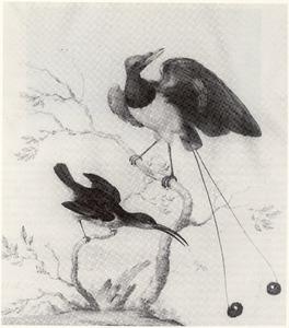 Twee exotische vogels op een tak