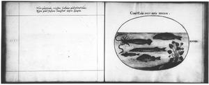 Vijf vissen, waaronder een inktvis, bij een oever met een gele plomp en een hagedis [?]