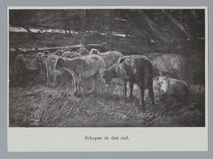 Schapen in de stal