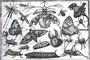 Meivlieg [?] en andere insecten
