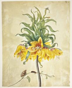 Keizerskroon, gele dovenetel, wilgetakvlinder en bladwesp